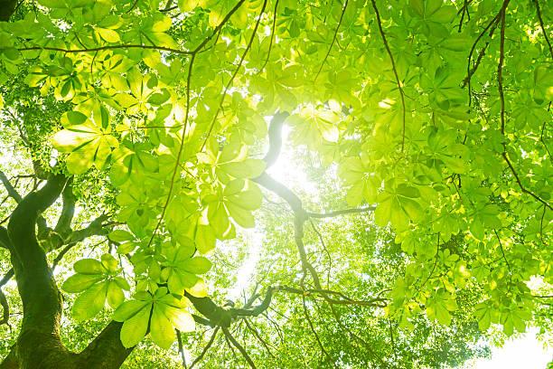 新鮮な緑の木 ストックフォト