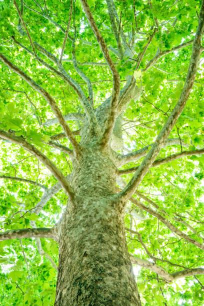 fresh green tree - 介護 zdjęcia i obrazy z banku zdjęć