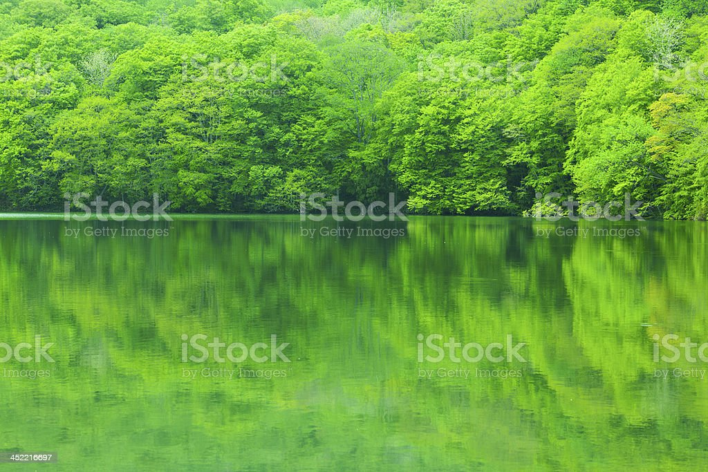 Fresh green tree reflected in water royalty-free stock photo