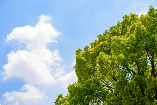 fresh green trees and blue sky and clouds. - 介護 zdjęcia i obrazy z banku zdjęć