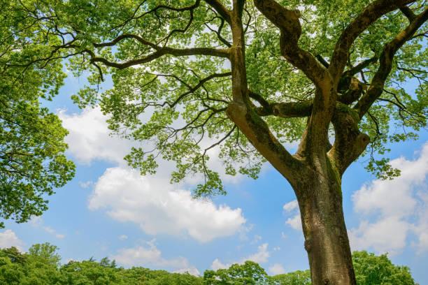 fresh green trees and blue sky and clouds - 介護 zdjęcia i obrazy z banku zdjęć