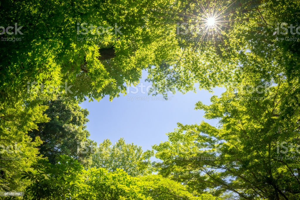 Fresh green trees and blue sky stock photo