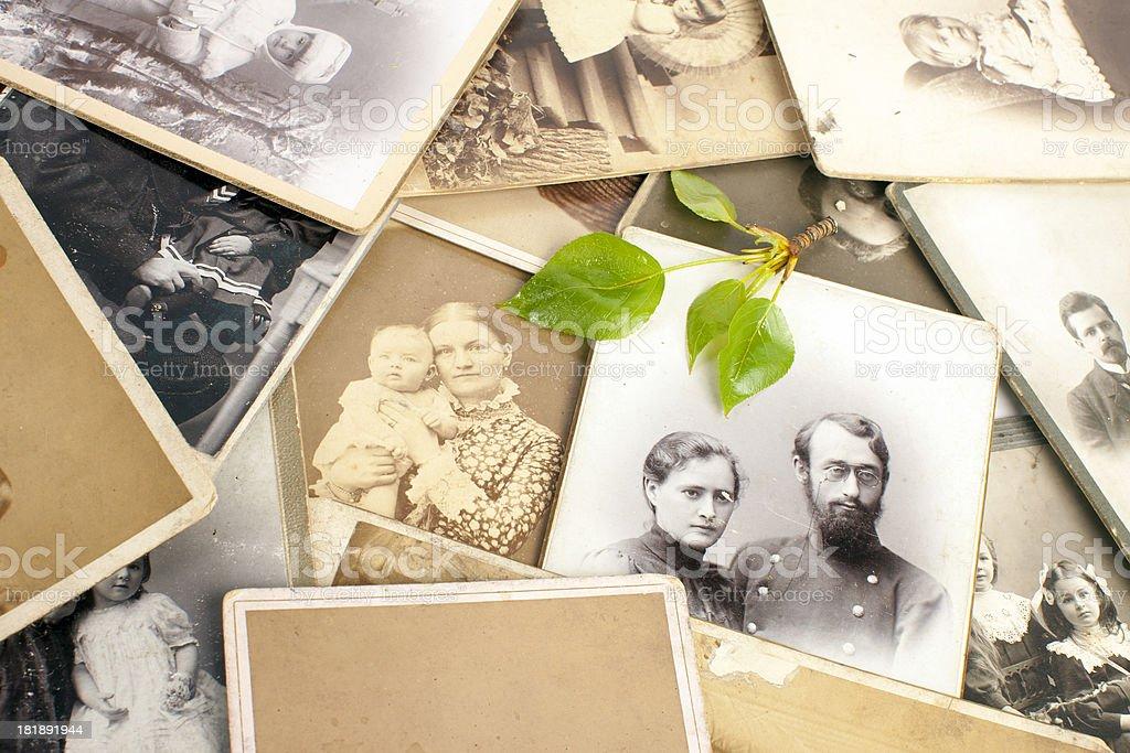 Fresco verde Ramoscello su vecchie fotografie. - foto stock