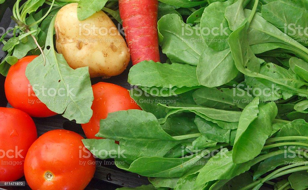 Fresh green vegitables stock photo