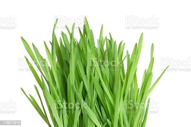 Photo of Fresh green wheatgrass