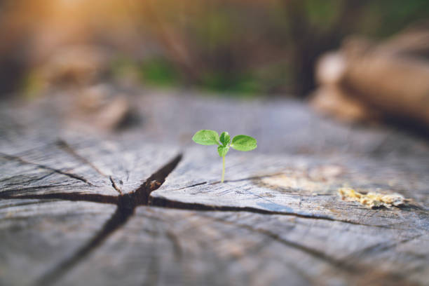 fresh green young plant of new seed born and grow up on a dark brown dead log tree in jungle showing contrast of colors lighting meaning and feeling of life stock photo