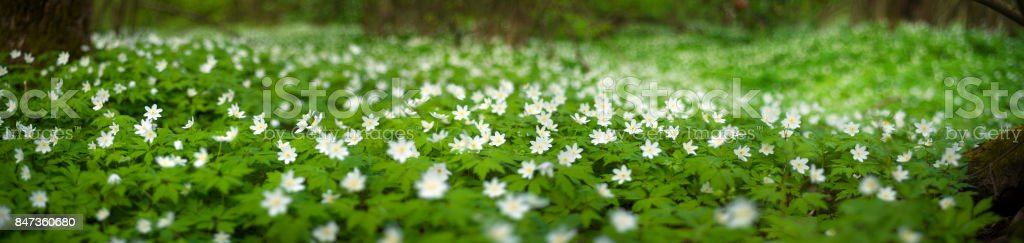 fresh greens and delicate fragrant flowers stock photo