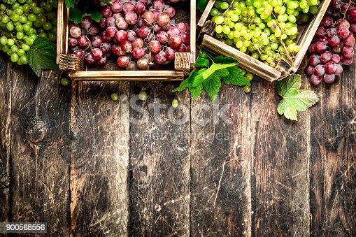 istock fresh harvest of grapes in boxes. 900568556