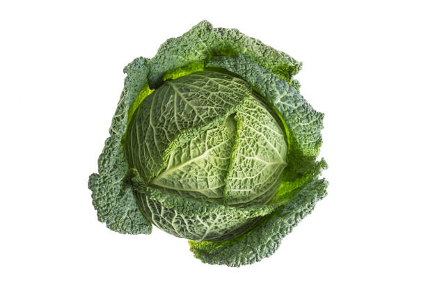 Fresh harvested cabbage with the outer leaf still intact. Isolated on white stock photo