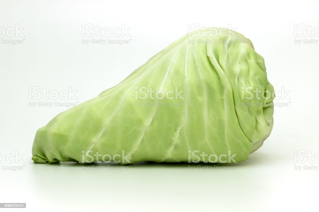 fresh harvested green pointed cabbage stock photo