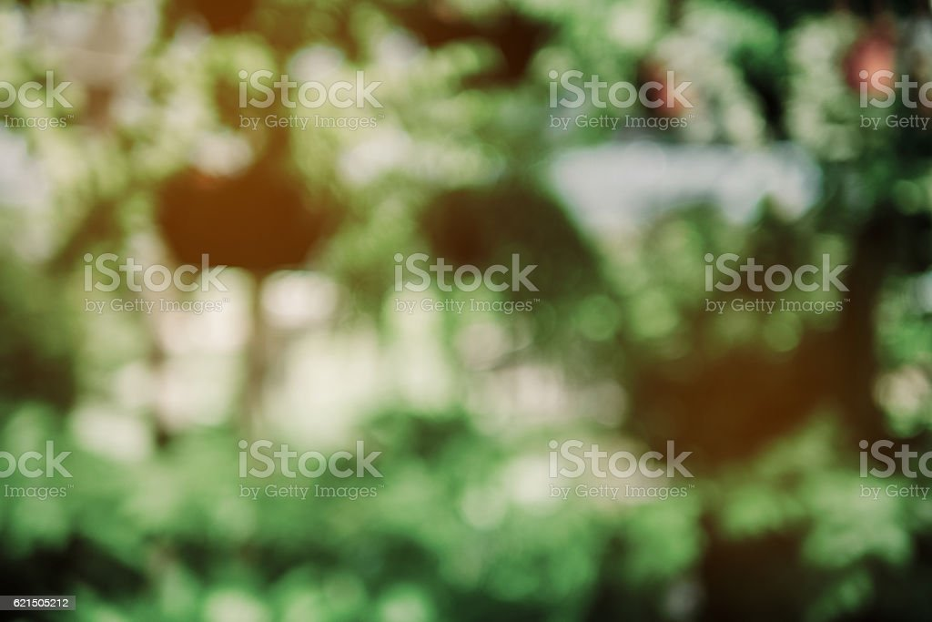 Fresh healthy green bio background. abstract blurred foliage and foto stock royalty-free