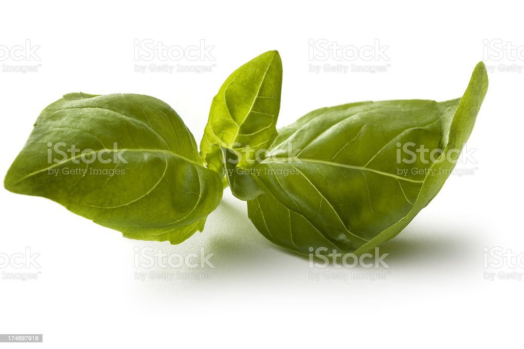 Fresh Herbs: Basil Isolated on White Background royalty-free stock photo
