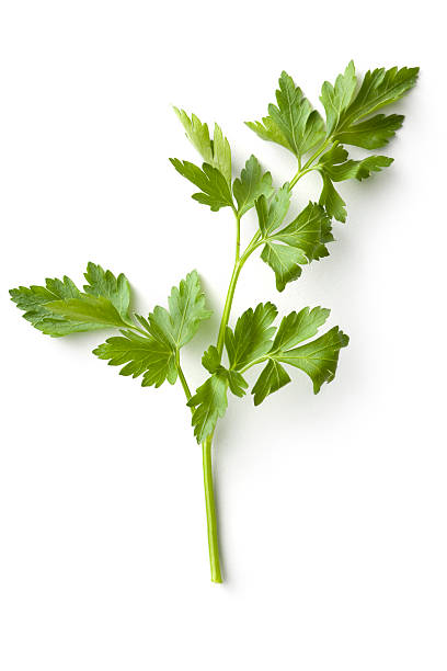 fresh herbs: celery - parsley stock photos and pictures