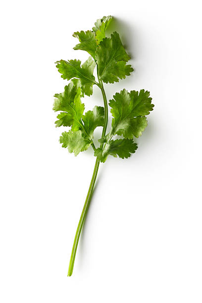 Fresh Herbs: Cilantro Isolated on White Background http://www.stefstef.nl/banners2/freshherbs.jpg cilantro stock pictures, royalty-free photos & images