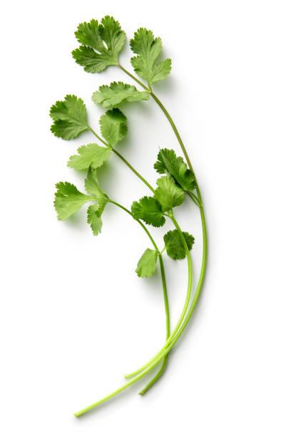 Fresh Herbs: Cilantro Isolated on White Background Fresh Herbs: Cilantro Isolated on White Background cilantro stock pictures, royalty-free photos & images