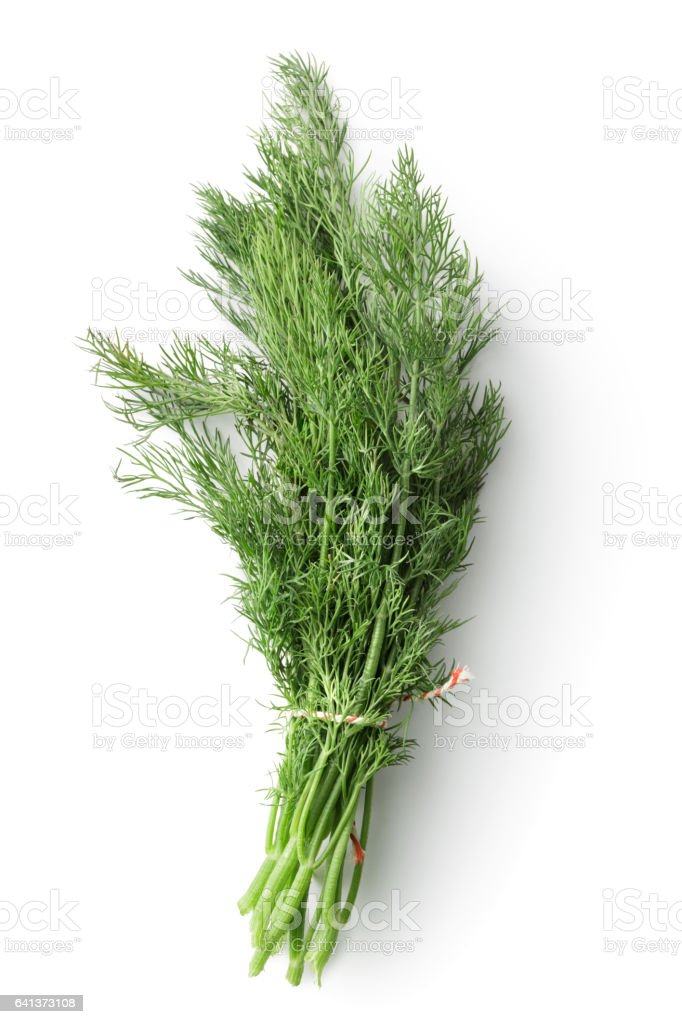 Fresh Herbs: Dill Isolated on White Background stock photo