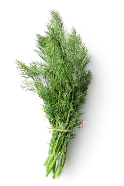 Fresh Herbs: Dill Isolated on White Background Fresh Herbs: Dill Isolated on White Background dill stock pictures, royalty-free photos & images