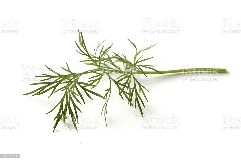 Fresh Herbs: Dill stock photo