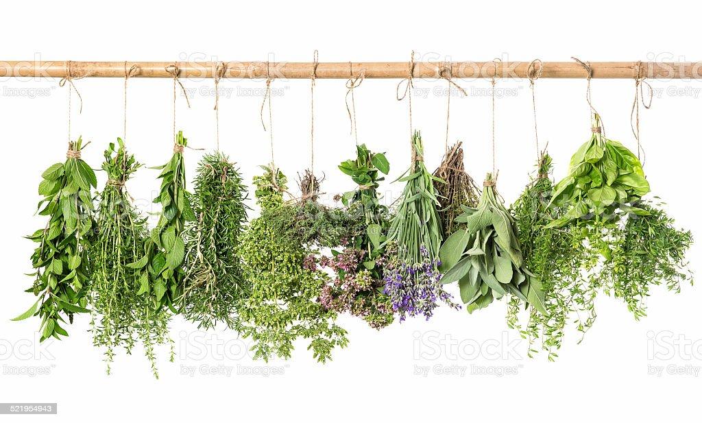 fresh herbs hanging isolated on white background stock photo