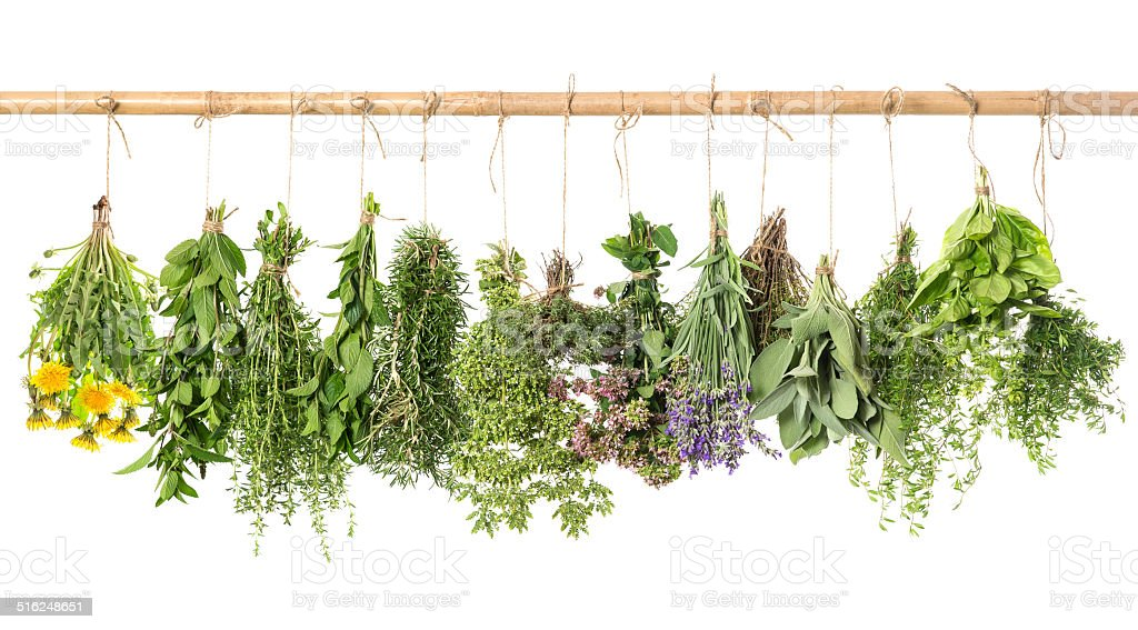 fresh herbs hanging isolated on white. basil, rosemary, thyme, m stock photo