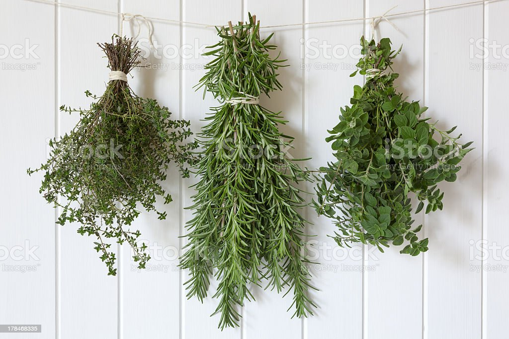 Fresh Herbs Hanging stock photo