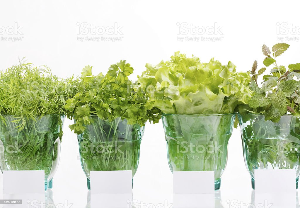 fresh herbs in the glass royalty-free stock photo