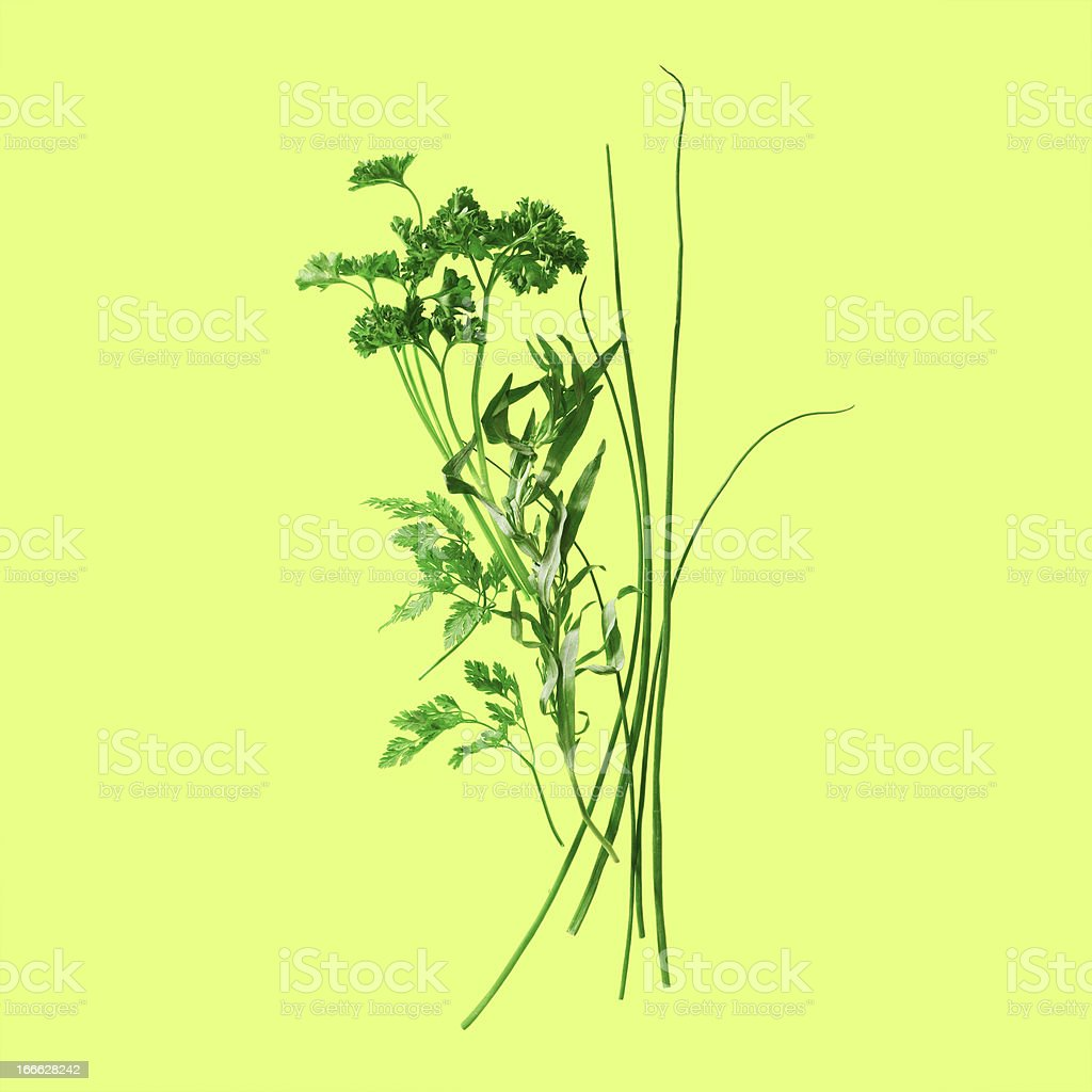 Fresh Herbs on Green royalty-free stock photo