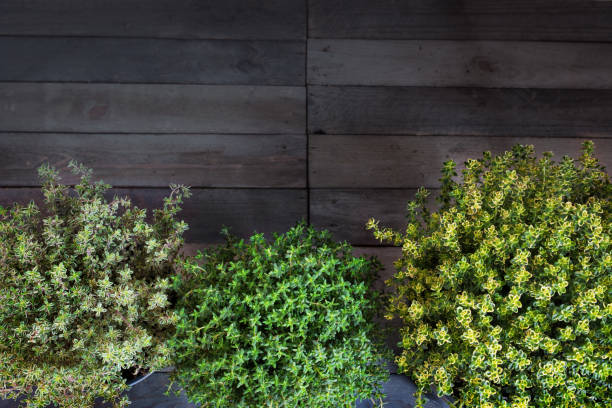 Fresh herbs on rustic wood Fresh thyme herbs in front of a rustic wooden wall vielfalt stock pictures, royalty-free photos & images