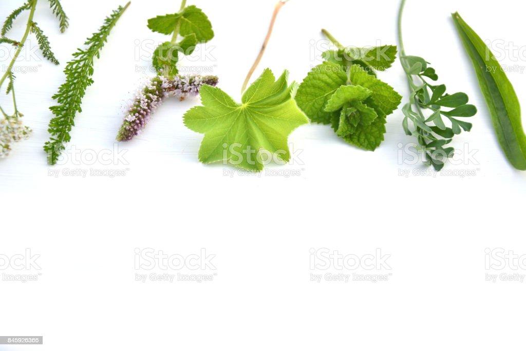Fresh herbs on white background stock photo
