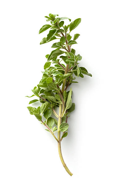 Fresh Herbs: Oregano Isolated on White Background stock photo