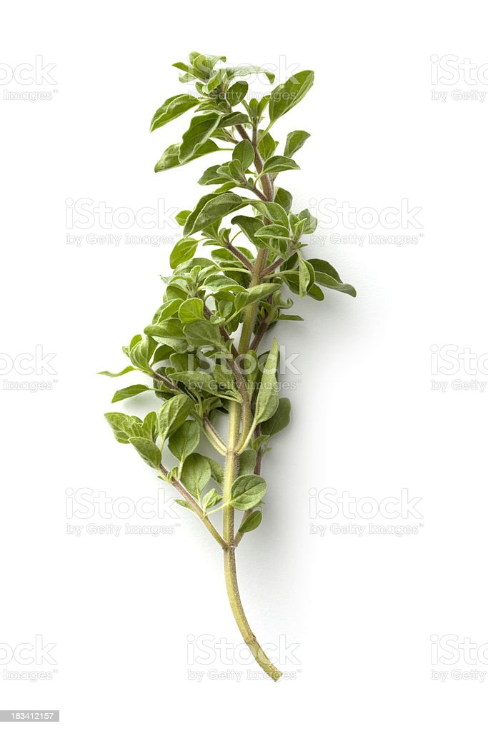 Fresh Herbs: Oregano Isolated on White Background stock photo