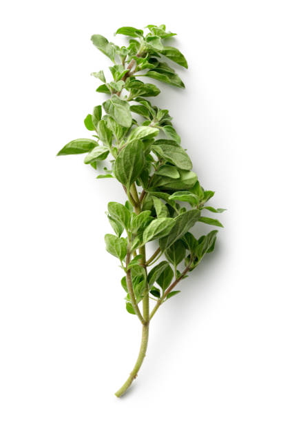 Fresh Herbs: Oregano Isolated on White Background Fresh Herbs: Oregano Isolated on White Background oregano stock pictures, royalty-free photos & images