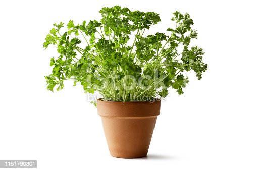 Fresh Herbs: Parsley Isolated on White Background