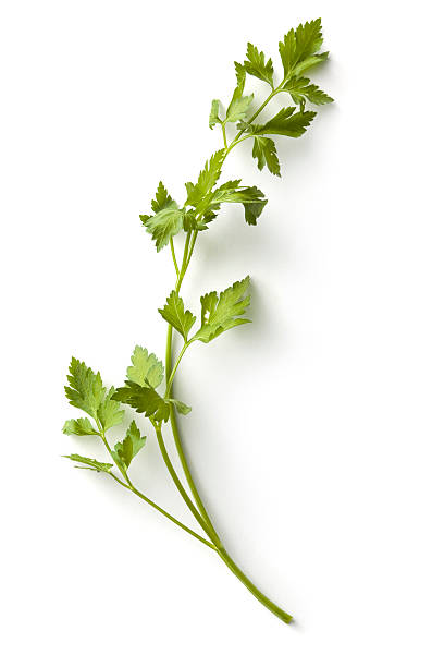 Fresh Herbs: Parsley More Photos like this here... cilantro stock pictures, royalty-free photos & images