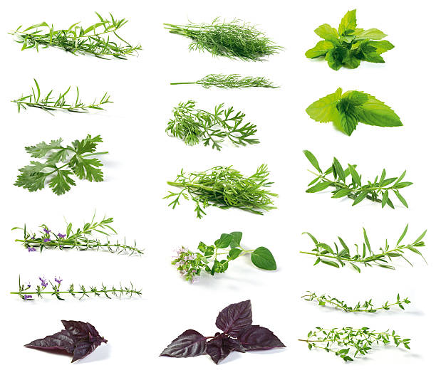 fresh herbs - tarragon stock photos and pictures