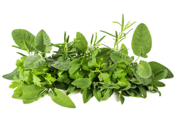 fresh  herbs - herb stock photos and pictures