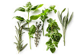 Fresh Herbs: Rosemary, Basil, Thyme, Parsley, Oregano and Sage Isolated on White Background