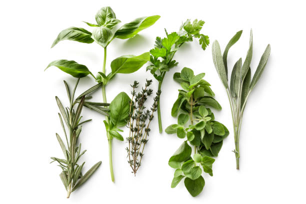 Fresh Herbs: Rosemary, Basil, Thyme, Parsley, Oregano and Sage Isolated on White Background Fresh Herbs: Rosemary, Basil, Thyme, Parsley, Oregano and Sage Isolated on White Background oregano stock pictures, royalty-free photos & images