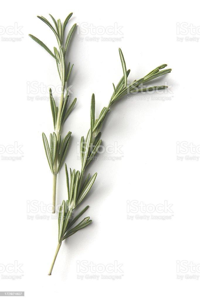 Fresh Herbs: Rosemary royalty-free stock photo