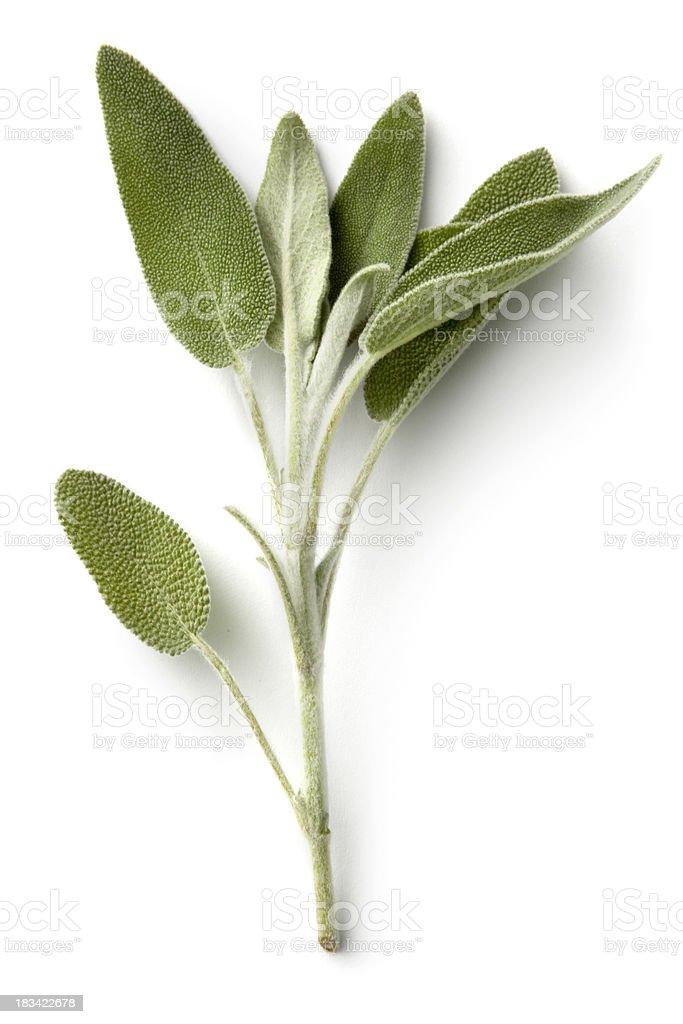 Fresh Herbs: Sage stock photo