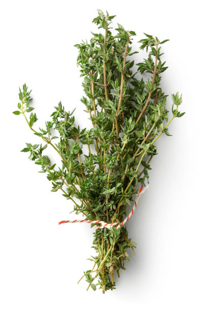 Fresh Herbs: Thyme Isolated on White Background stock photo