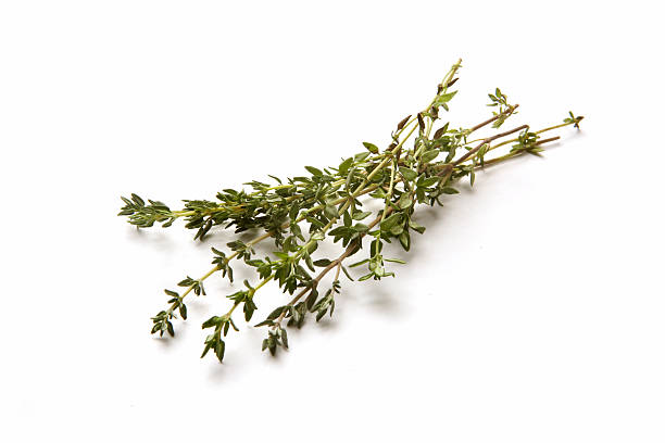 Fresh Herbs: Thyme More Photos like this here... thyme photos stock pictures, royalty-free photos & images