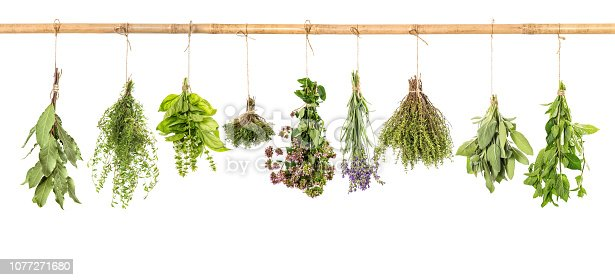 Fresh herbs hanging isolated on white background. Bundle of basil, sage, thyme, mint, bay laurel, marjoram, lavender