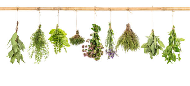 Fresh herbs white background basil sage thyme mint bay laurel Fresh herbs hanging isolated on white background. Bundle of basil, sage, thyme, mint, bay laurel, marjoram, lavender herbal medicine stock pictures, royalty-free photos & images