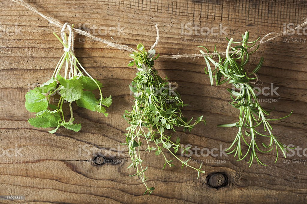 fresh hers hanging on a rope royalty-free stock photo