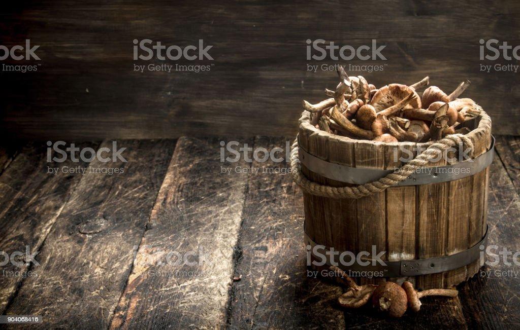 Fresh honey agarics in a wooden bucket. stock photo
