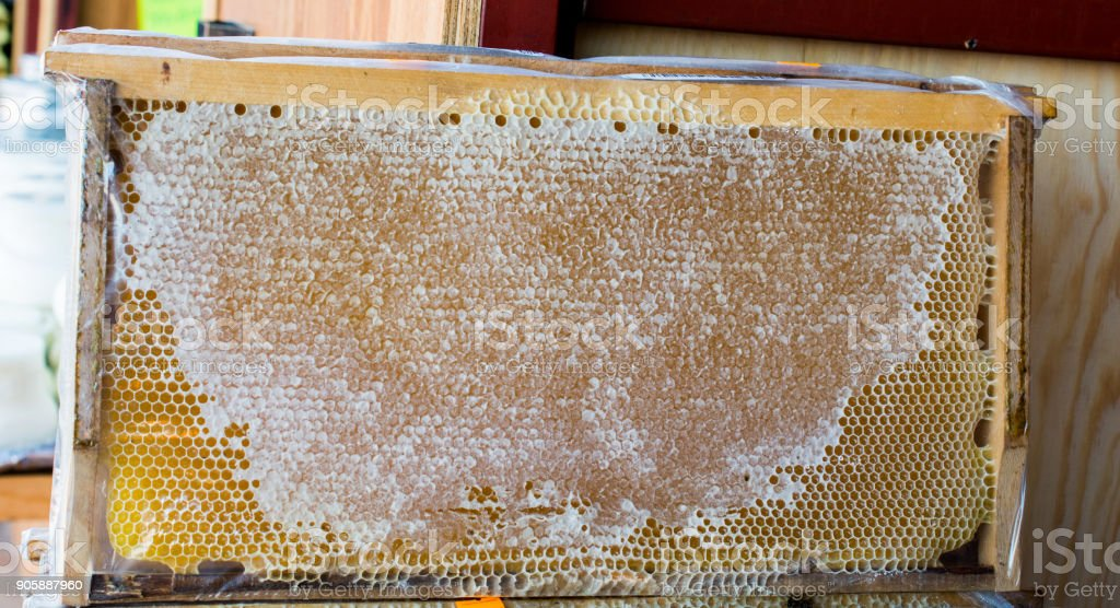 Fresh honey in the sealed comb frame stock photo