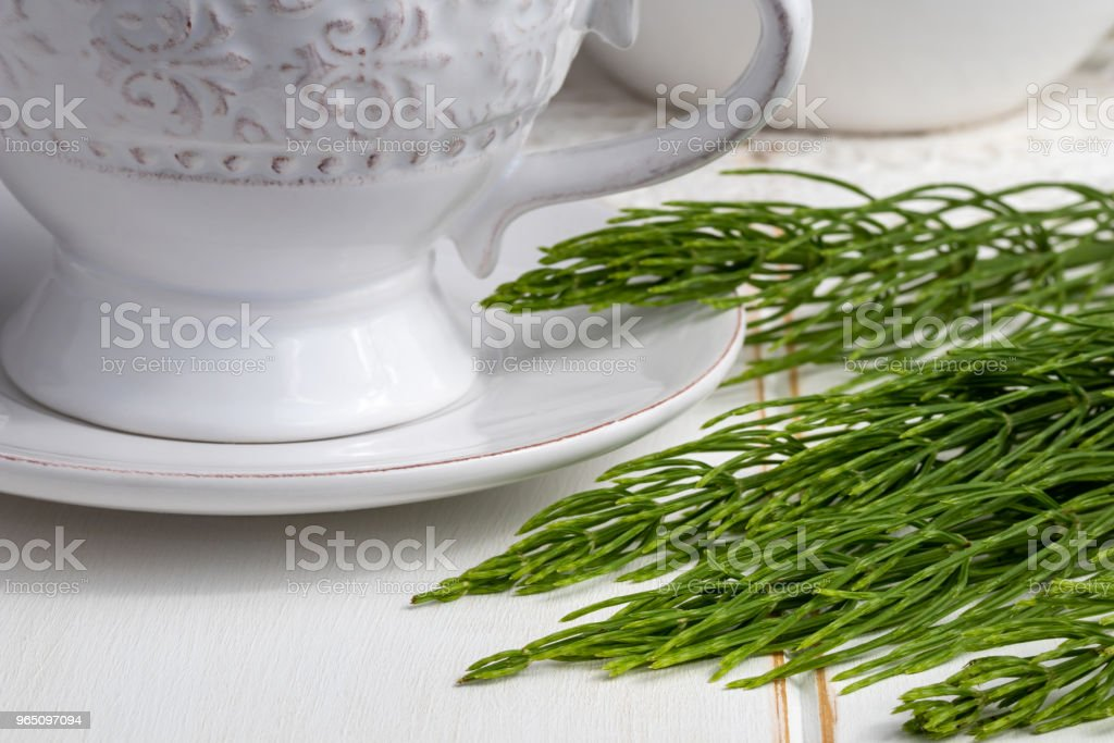 Fresh horsetail twigs with a cup of tea royalty-free stock photo