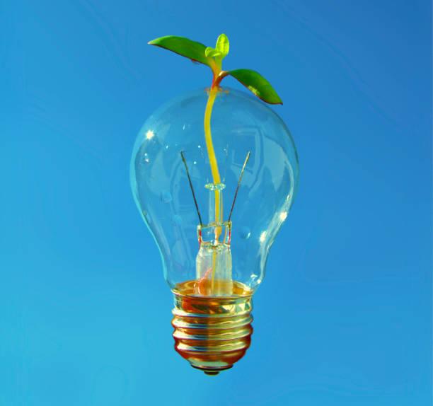 ny idé för hälsosam och hållbar utveckling. glänsande glödlampa med liten planta kommer igenom. - penetrating bildbanksfoton och bilder