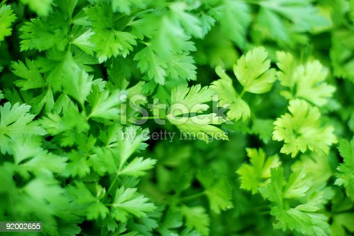 Fresh ingredients : parsley